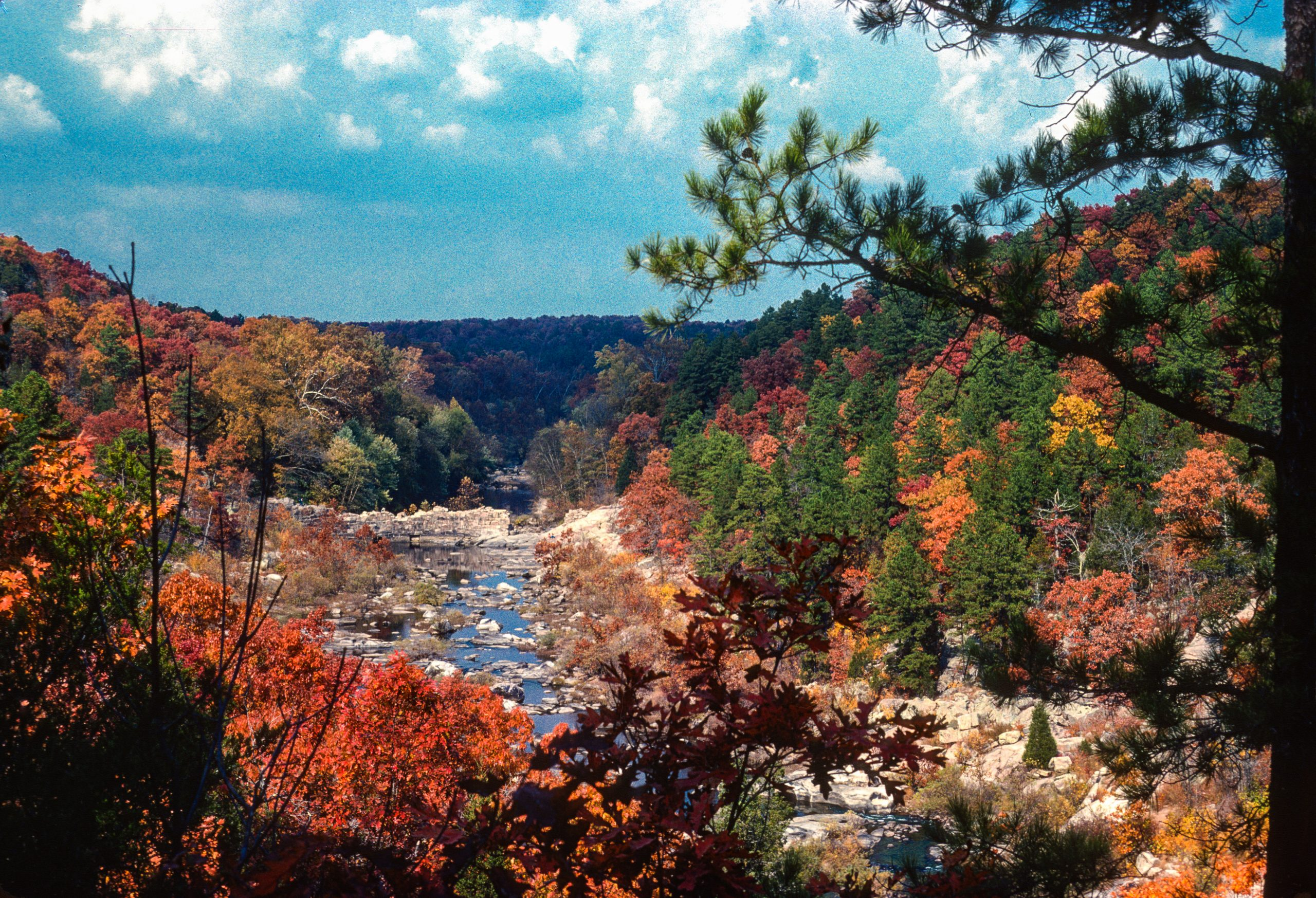 Fall leaves in the Ozarks