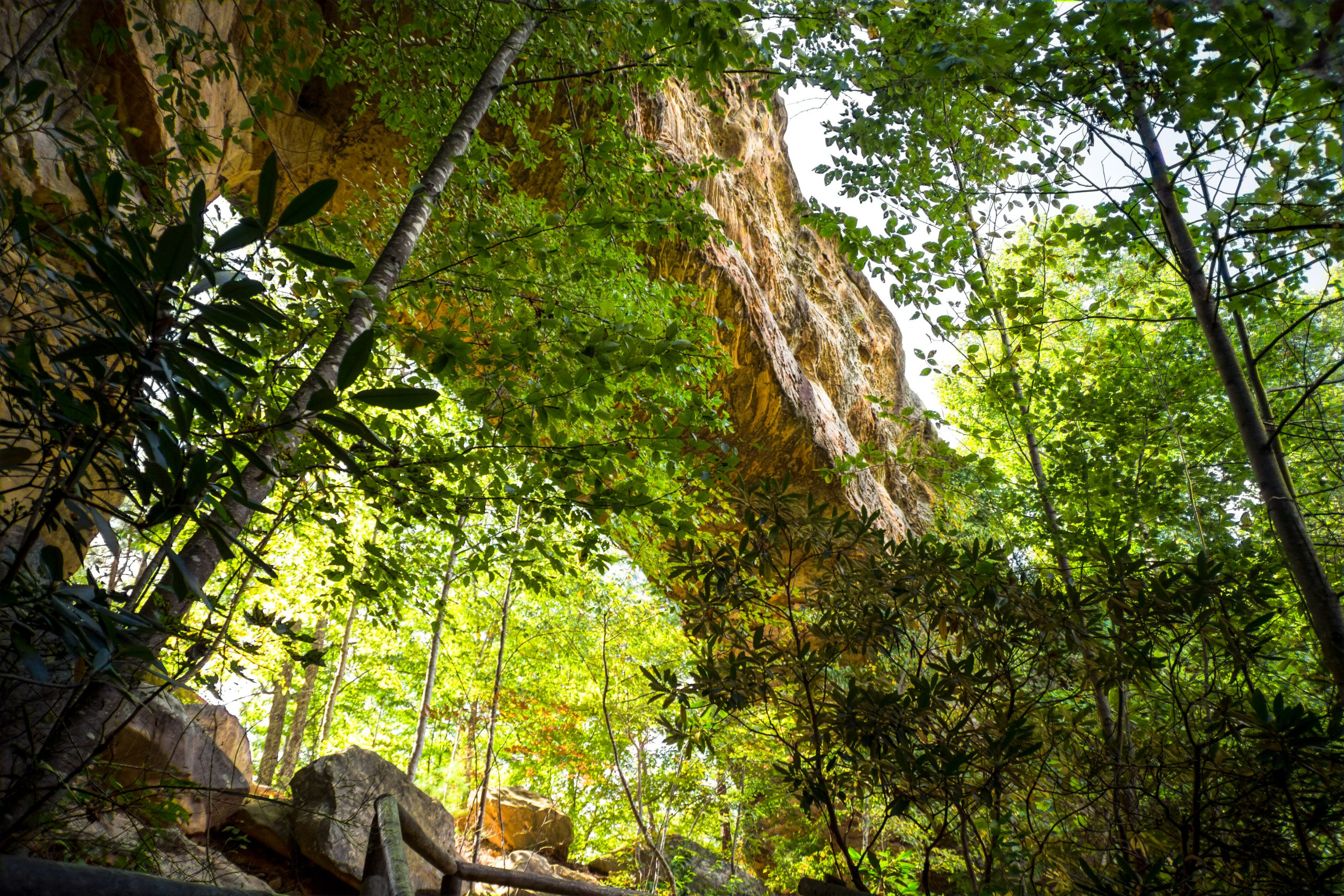 Red River Gorge Wilderness Area